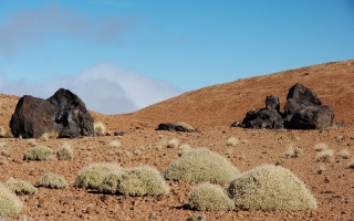 Teneriffa Teide Nationalpark #5