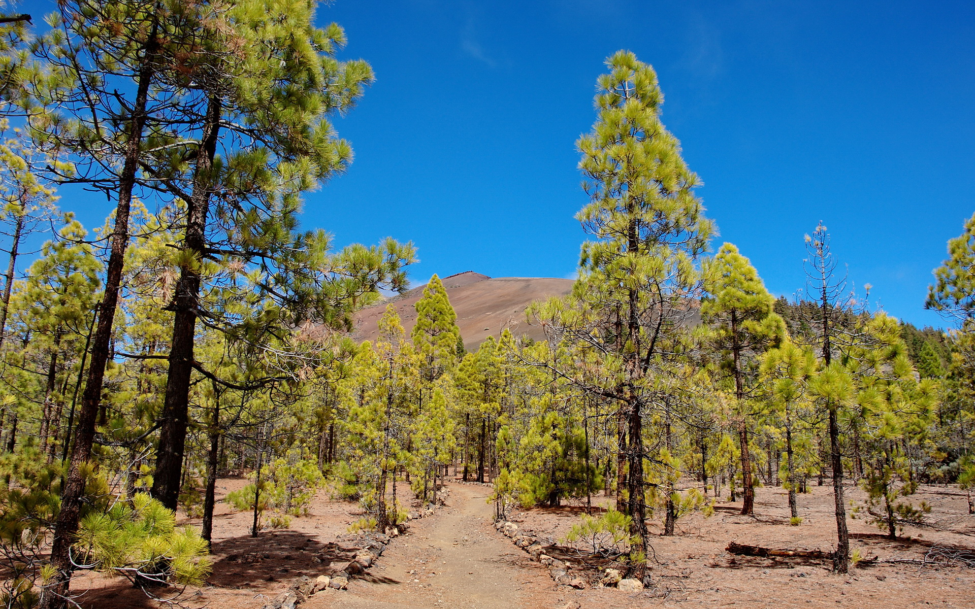 Teneriffa Teide Nationalpark #8